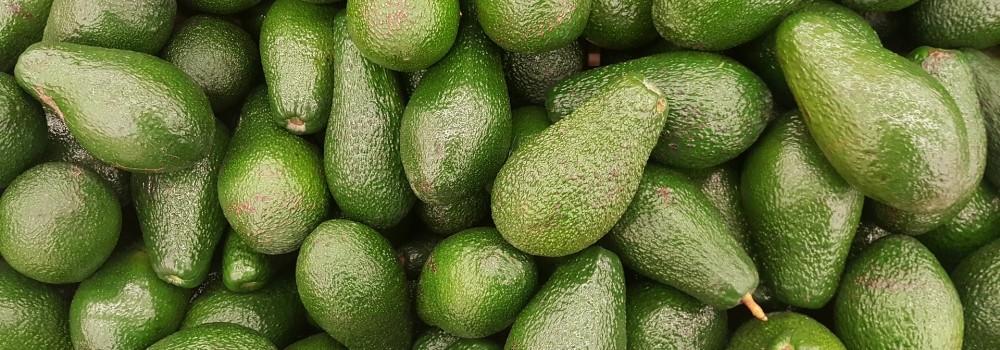 Tutti amano l'avocado!