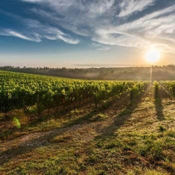 Notizie dal blog: Vino, Italia leader mentre il settore è in crisi