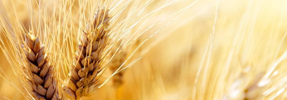Giornata della terra 2016: focus sull'alimentazione sostenibile