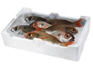 Pezzogna 300/500 fresco pescato  FAO 27/34/37 AL KG