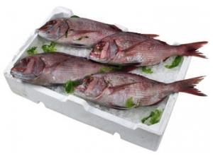 Pagro 400/600-600/800 fresco pescato fao 34 al kg