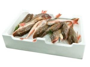GALLINELLA 200/400 FRESCO PESCATO FAO 27 al kg