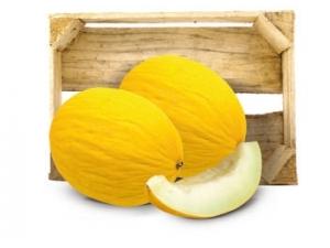Melone giallo or. italia