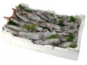 Calamaro 200/400-300/500 fao 27/34 al kg
